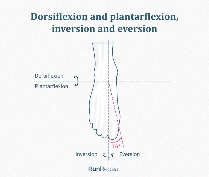 Dorsiflexion, plantarflexion, inversion, eversion