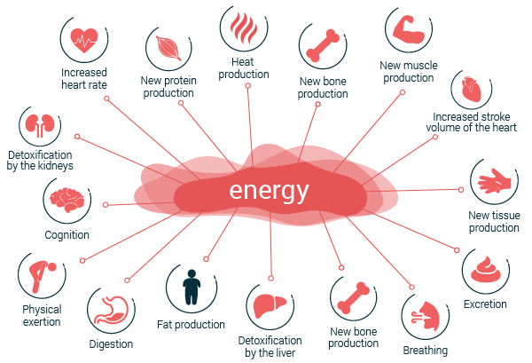 possibilities for energy expenditure