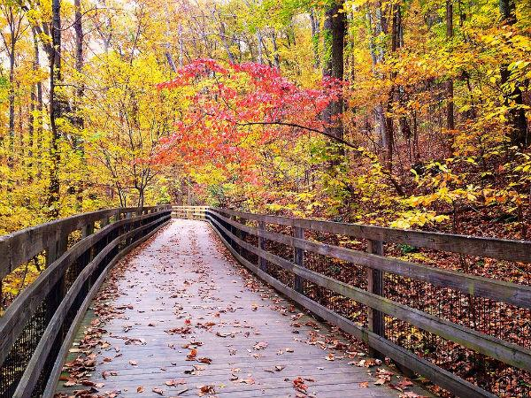 Trail-at-Monticello